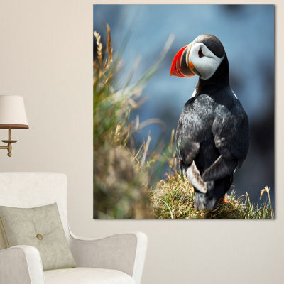 Designart Cute Puffin Relaxing Animal Art Painting