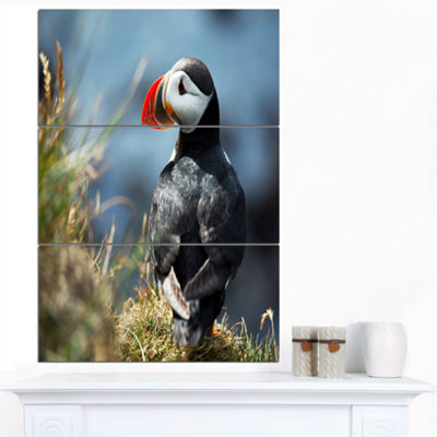 Designart Cute Puffin Relaxing Animal Art Painting- 3 Panels