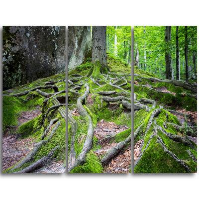 Designart Deep Moss Forest In Ukraine Landscape Triptych Canvas Art Print