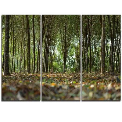 Designart Dense Rubber Tree Plantation Landscape Triptych Canvas Art Print
