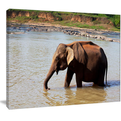 Designart Elephant In Water In Sri Lanka Extra Large African Canvas Art Print