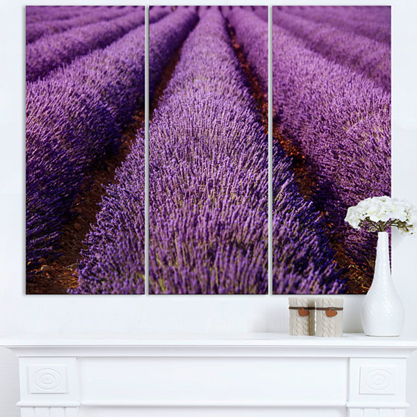 Designart Endless Rows Of Lavender Field OversizedLandscape Wall Art Print