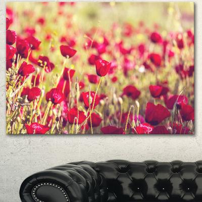 Designart Fantastic View Of Wild Poppy Flowers Large Flower Canvas Art Print - 3 Panels