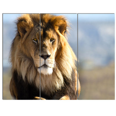 Designart Fierce Face Of King Of The Wild AfricanCanvas Art Print - 3 Panels