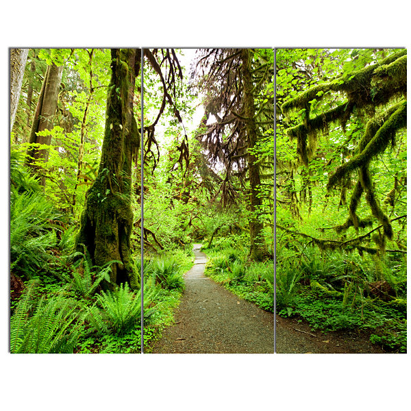 Designart Footpath In Redwood Rain Forest Landscape Canvas Art Print - 3 Panels