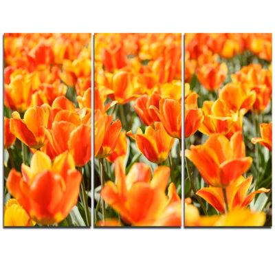 Designart Fresh Tulip Flowers On Sunny Day FloralArt Triptych Canvas Print