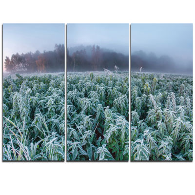 Designart Frozen Hemp Field In Autumn Morning Landscape Print Wall Artwork