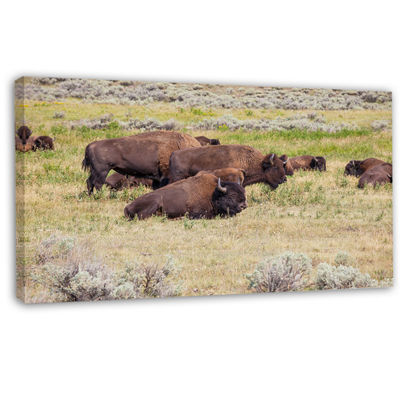 Designart Grazing Gang Of Buffalos Animal Canvas Art Print