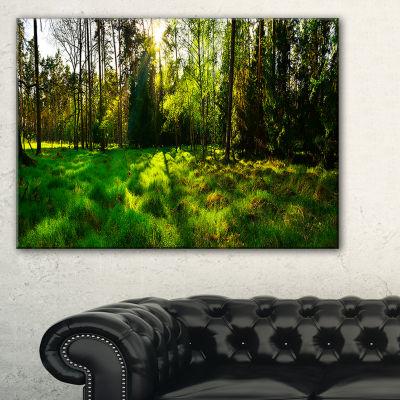 Designart Green Forest Sunset Panorama Landscape Artwork Canvas