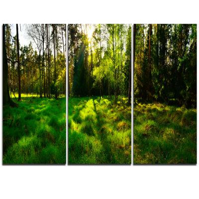 Designart Green Forest Sunset Panorama Landscape Artwork Triptych Canvas