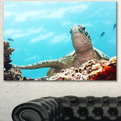 Designart Green Turtle Underwater View OversizedAnimal Wall Art