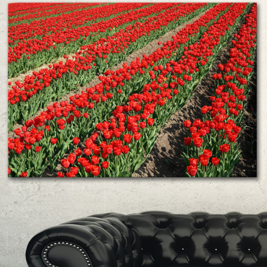 Designart Rows Of Red Tulip Flowers Floral CanvasArt Print
