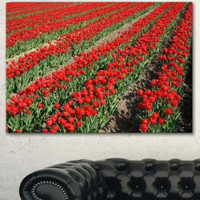 Designart Rows Of Red Tulip Flowers Floral CanvasArt Print - 3 Panels