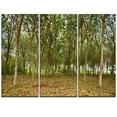 Designart Rubber Tree Plantation During Midday Landscape Triptych Canvas Art Print