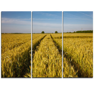 Designart Rural Road Through Wheat Field LandscapeArtwork Triptych Canvas
