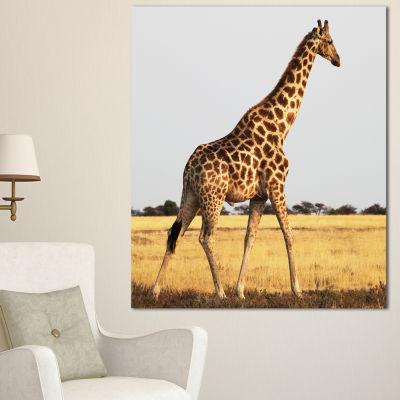 Designart Single Giraffe In Africa Walking Extra Large African Canvas Art Print - 3 Panels