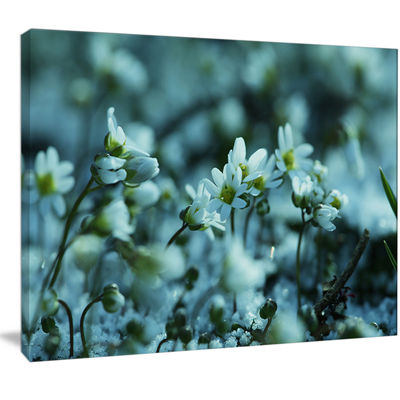 Designart Small White Flowers On Blue BackgroundFloral Canvas Art Print