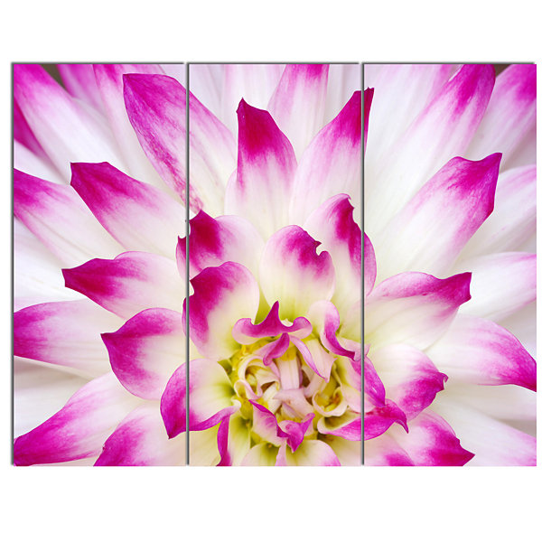 Designart Smooth White Rose Floral Petals Floral Canvas Art Print - 3 Panels