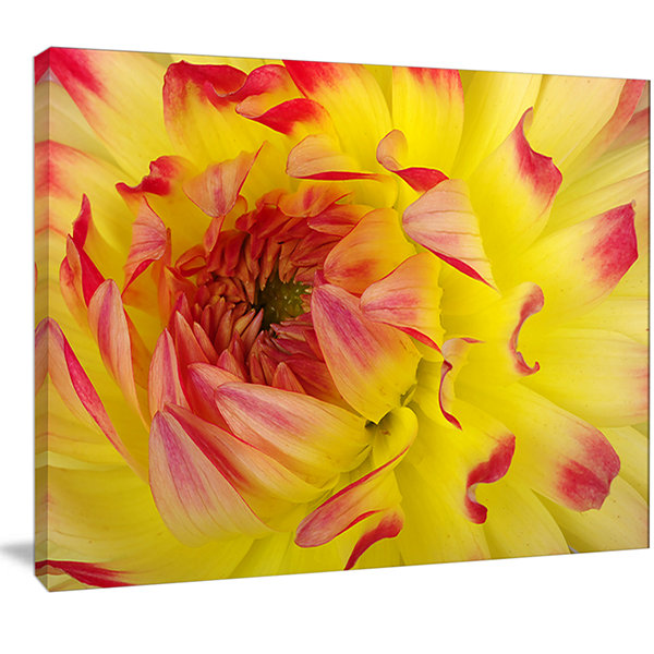 Designart Smooth Yellow Red Petals Close Up FloralCanvas Art Print