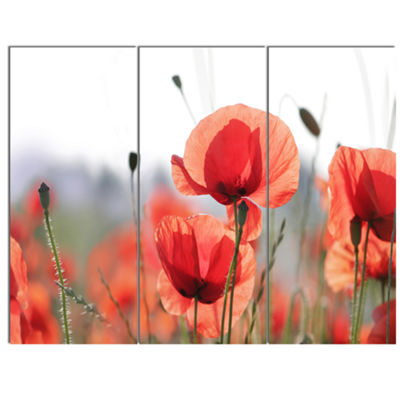Designart Soft Poppy Flowers Petals View Floral Canvas Art Print - 3 Panels