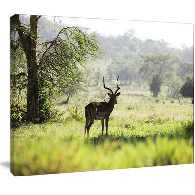 Designart Solitary Antelope In Green Park AfricanLandscape Canvas Art Print