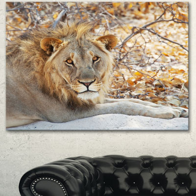 Designart Solitary Lion Taking Rest In Forest African Canvas Art Print - 3 Panels