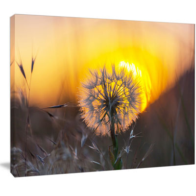Designart Stunning Dandelion View At Sunset FloralCanvas Art Print