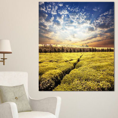 Designart Tea Plantation Under Cloudy Sky Landscape Wall Art On Canvas - 3 Panels