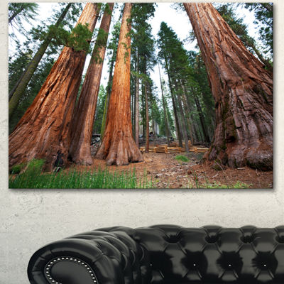 Designart Three Large Sequoya Trees African Landscape Canvas Art Print