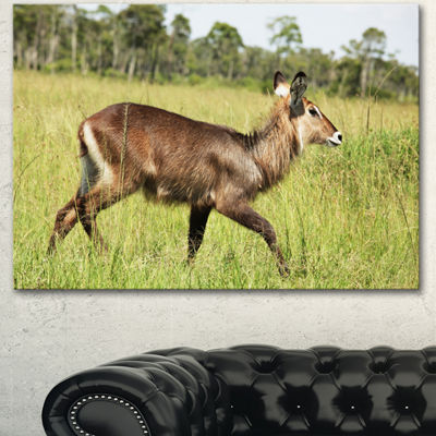Designart Waterbuck Antelope In Green Grass ExtraLarge African Canvas Art Print