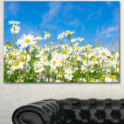 Designart White Daisies Under Bright Blue Sky Floral Canvas Art Print