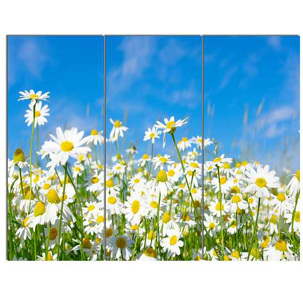 Design Art White Daisies Under Bright Blue Sky Floral Canvas Art Print - 3 Panels