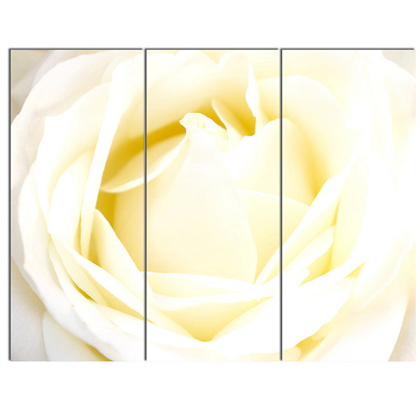 Designart White Rose With Close Up Petals Floral Canvas Art Print - 3 Panels