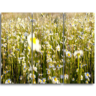 Designart Wild Chamomile Flowers Field Large Flower Triptych Canvas Wall Art