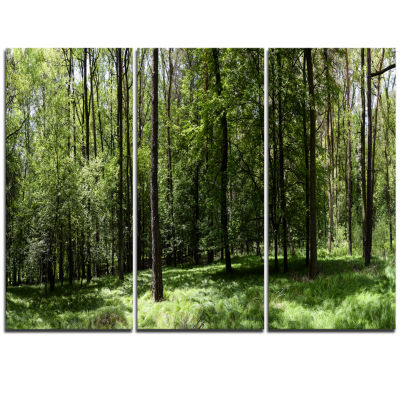 Designart Wild Green Forest Panorama Oversized Forest Triptych Canvas Artwork