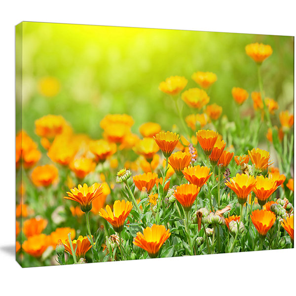 Designart Yellow Marigold Flowers Floral Canvas Art Print