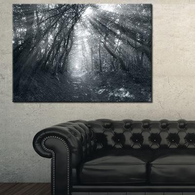 Designart Sun Rays Through Gray Trees Canvas Art