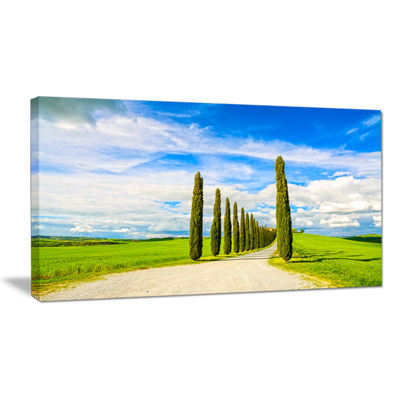 Designart White Road Through Cypress Trees Canvas Art
