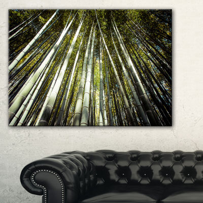 Designart Long Bamboos In Bamboo Forest Canvas Art