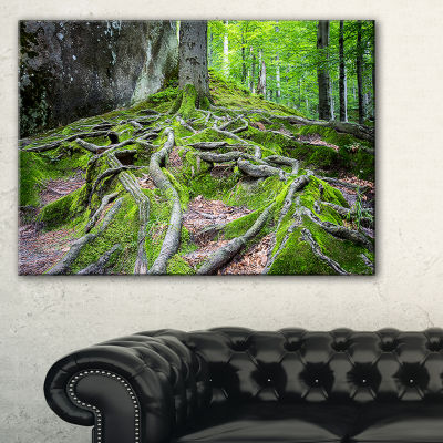 Designart Deep Moss Forest In Ukraine Canvas Art