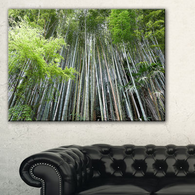 Designart Dense Bamboo Forest Of Japan Canvas Art