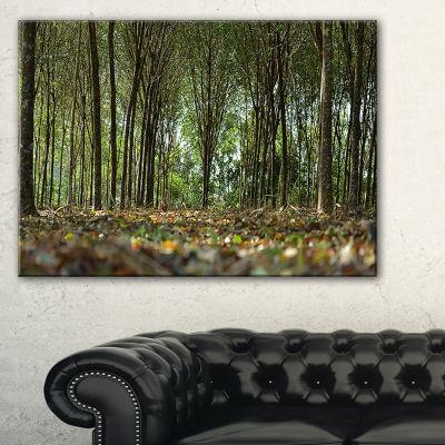 Designart Dense Rubber Tree Plantation Canvas Art