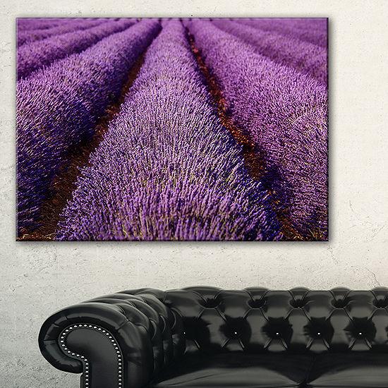 Designart Endless Rows Of Lavender Field Canvas Art