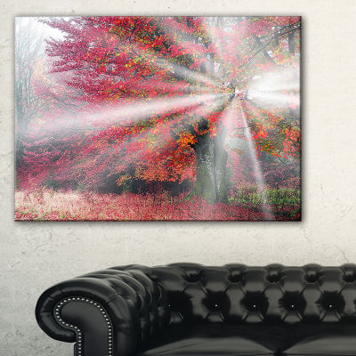 Designart Mystical Light In Red Fall Forest 3-pc. Canvas Art