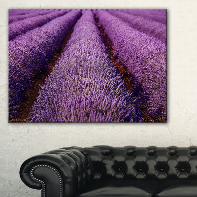 Designart Endless Rows Of Lavender Field Canvas Art