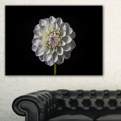 Designart Isolated Dahlia Flower In Black Canvas Art