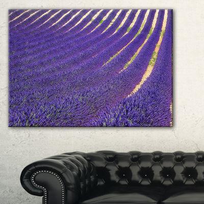 Designart Lavender Blooming Fields As Texture Canvas Art
