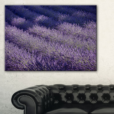 Designart Lavender Field And Ray Of Light Canvas Art