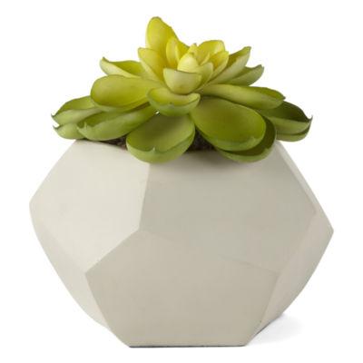 JCPenney Home Orgins Planted Succulent Pot