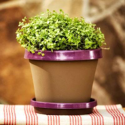 "Bloem Terra TwoTone Planter Saucer - 6.5"""